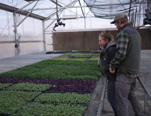 Farmers in Focus: Brush Creek Microgreens